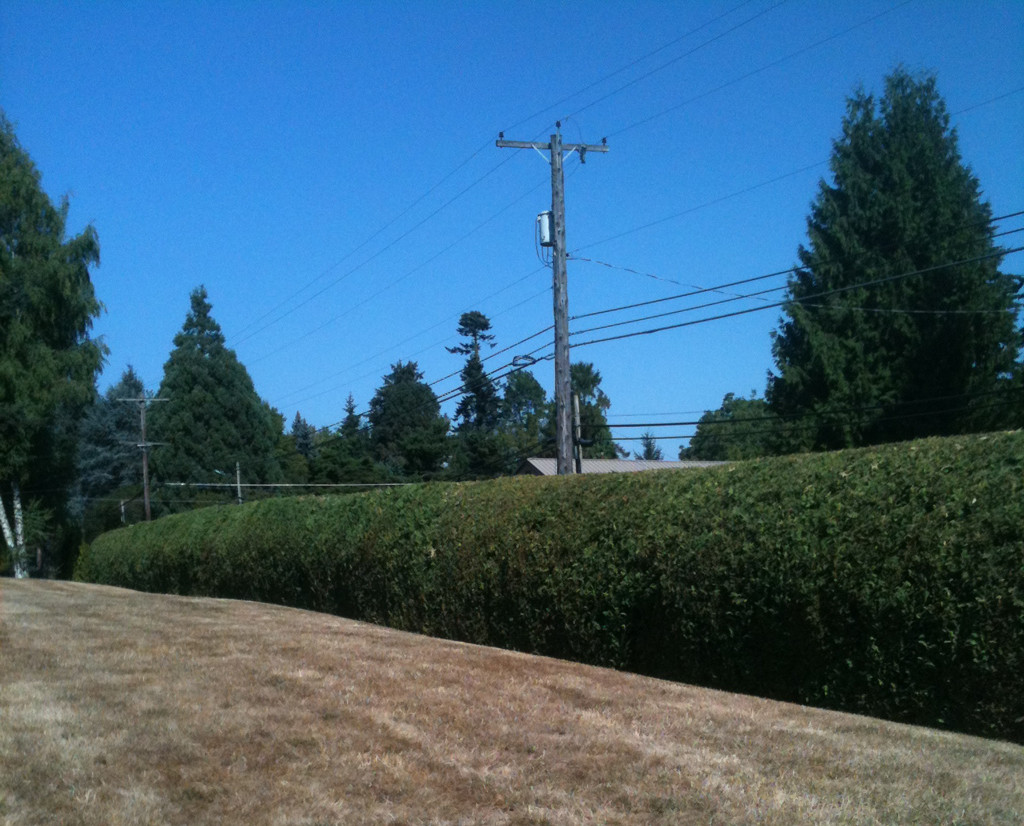 hedge and shrub trimming services in Portland, Oregon